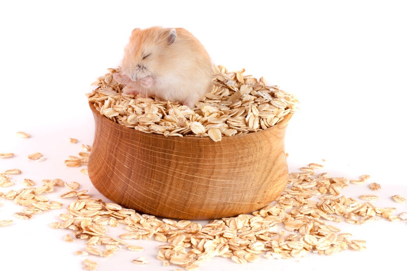 Hamster sitting in food bowl