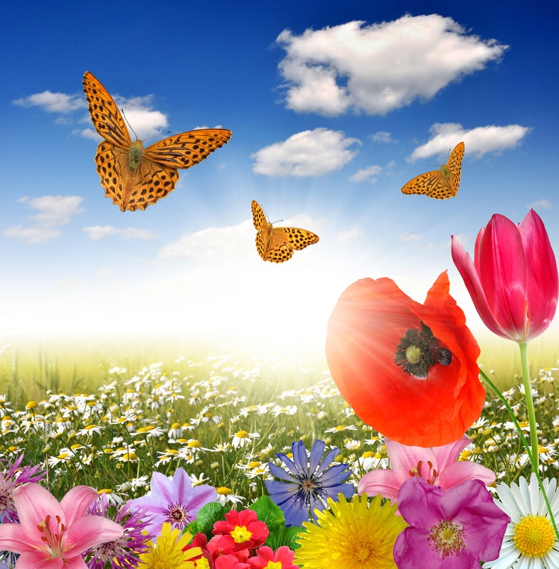 Butterflies, blooming flowers and clouds.