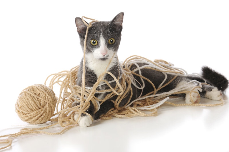 A perplexed cat stuck, tangled up in a ball of yarn
