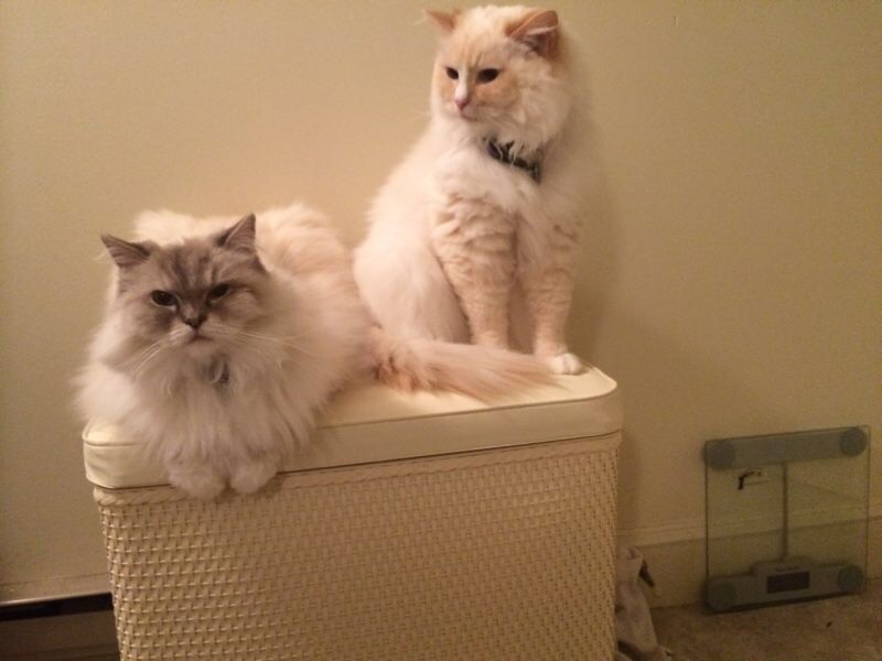 Diamond and Mellow on a hamper