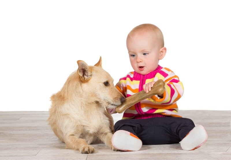 Baby gives dog a bone.