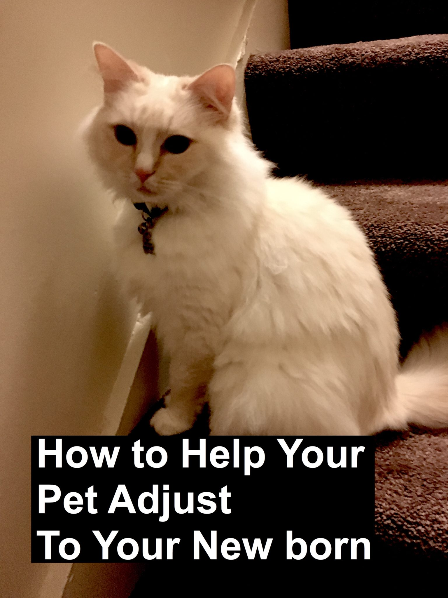 Mellow and How To Help Your Pet pin