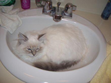Diamond in the sink