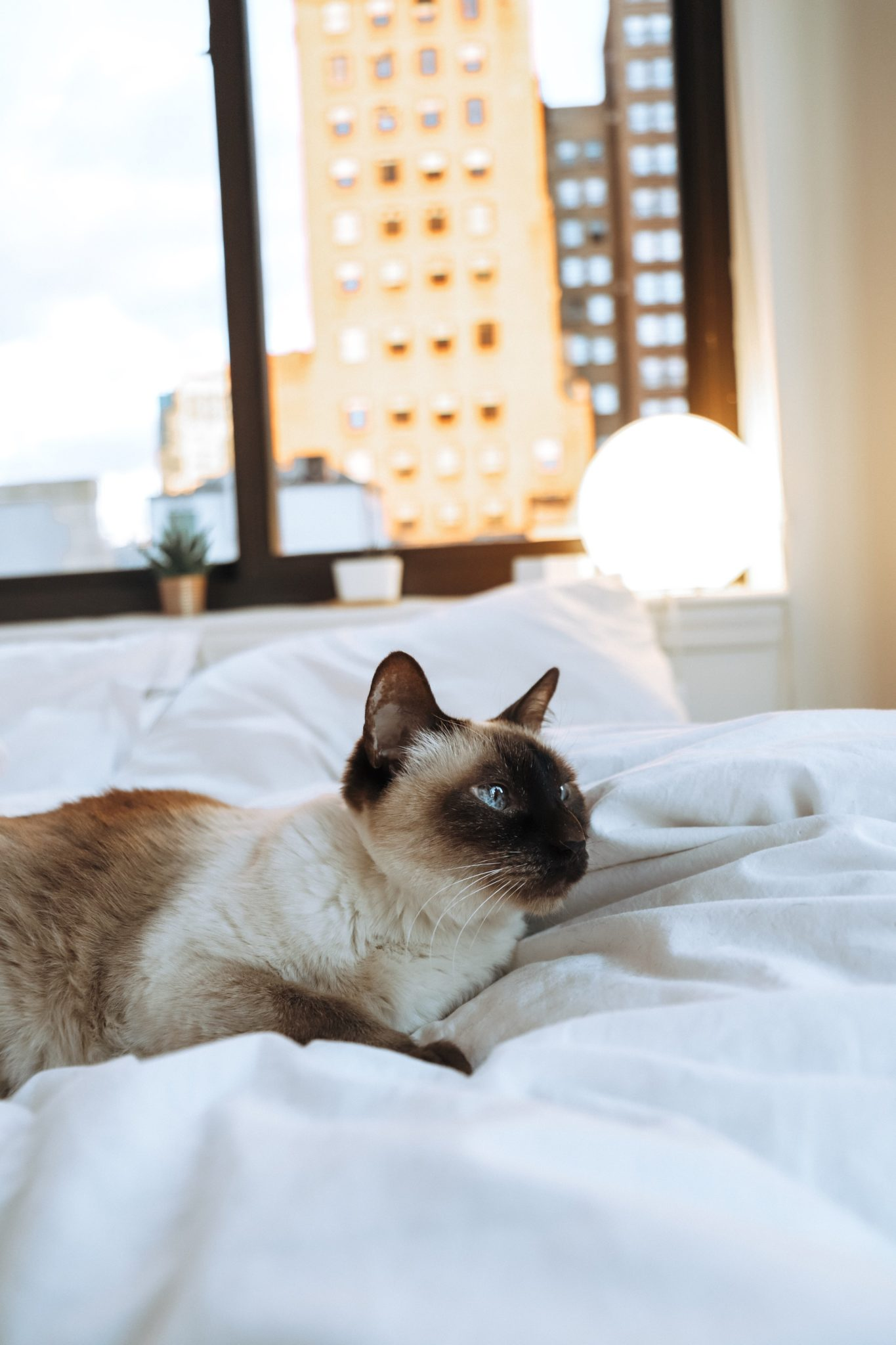 Cat napping in a bed