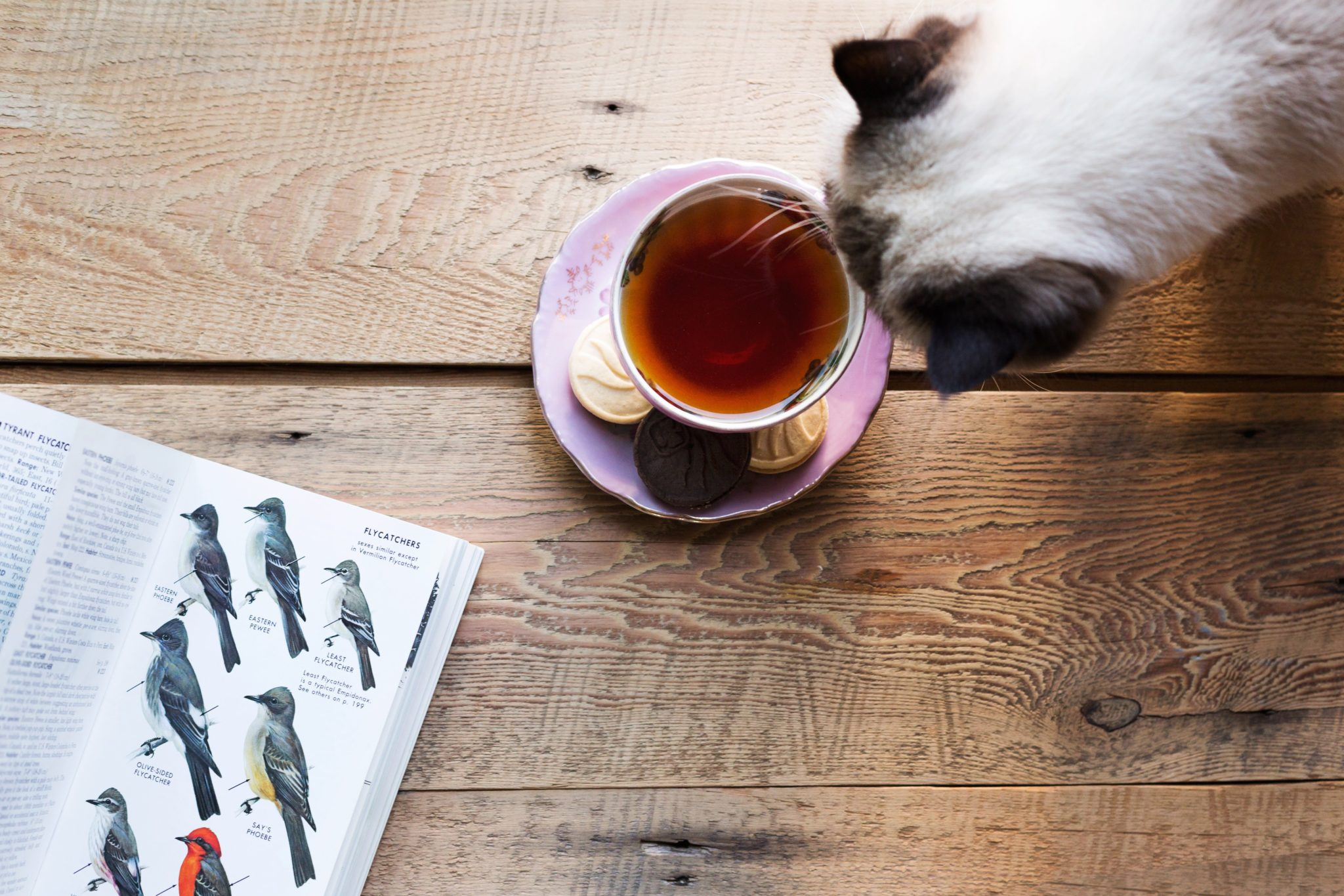 Tea time with the cat
