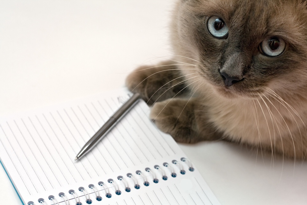 Cat with notebook and pen