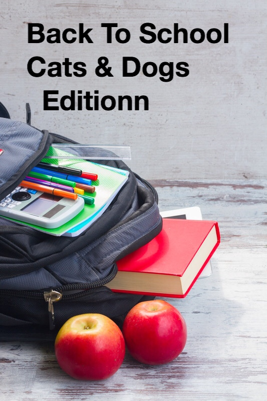 Back to school Cats and Dogs edition pin
