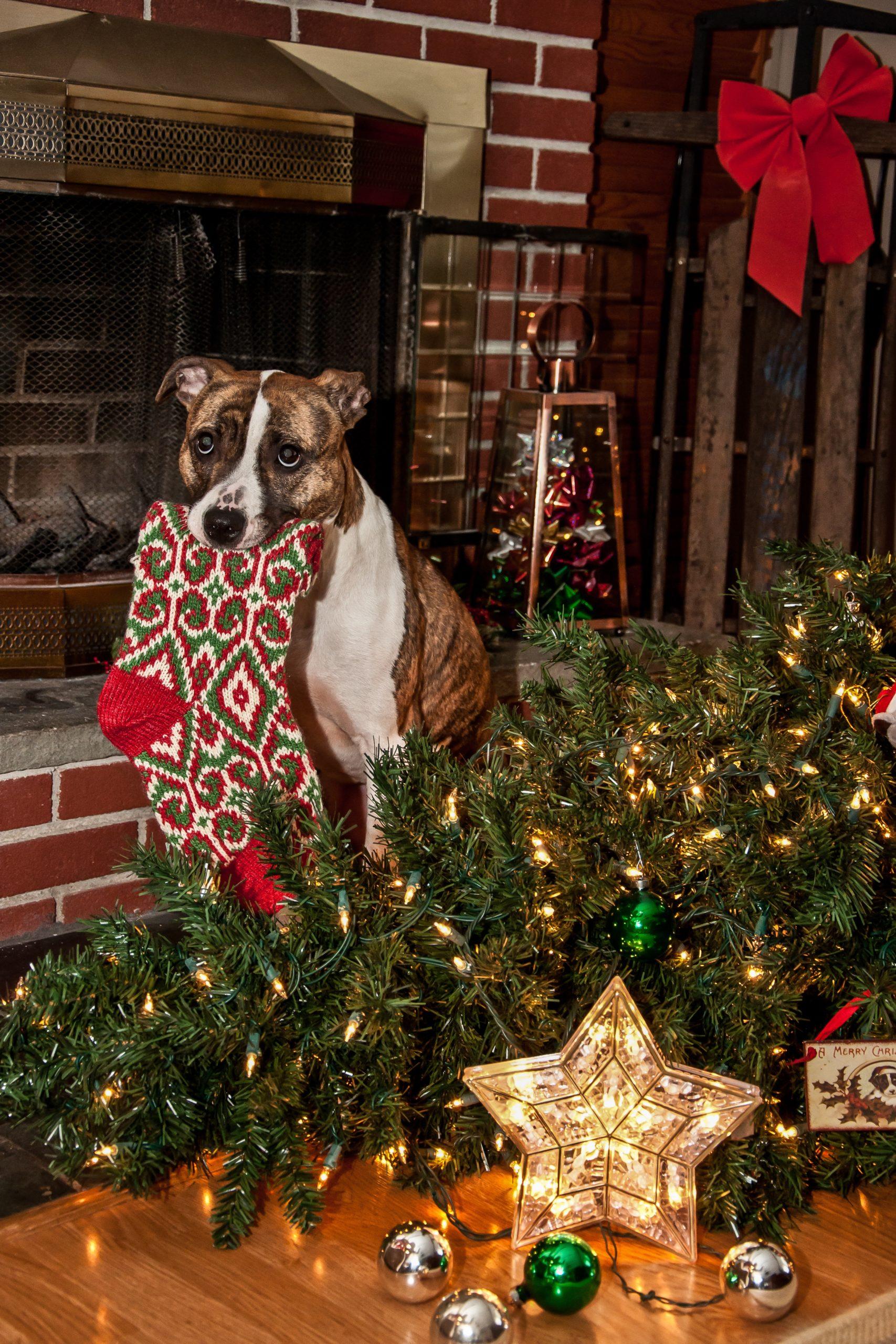 Dog knocks over Christmas tree