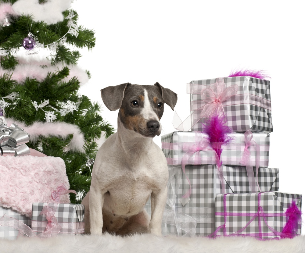 Dog next to Christmas tree and gifts