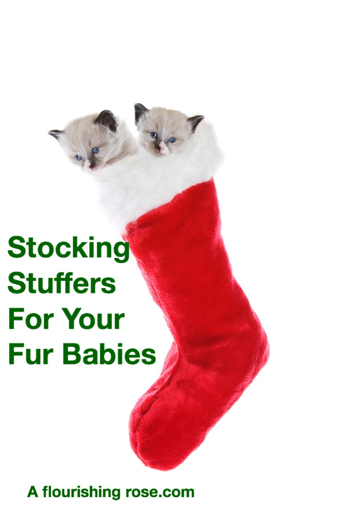 Stocking Stuffers for Your Fur Babies