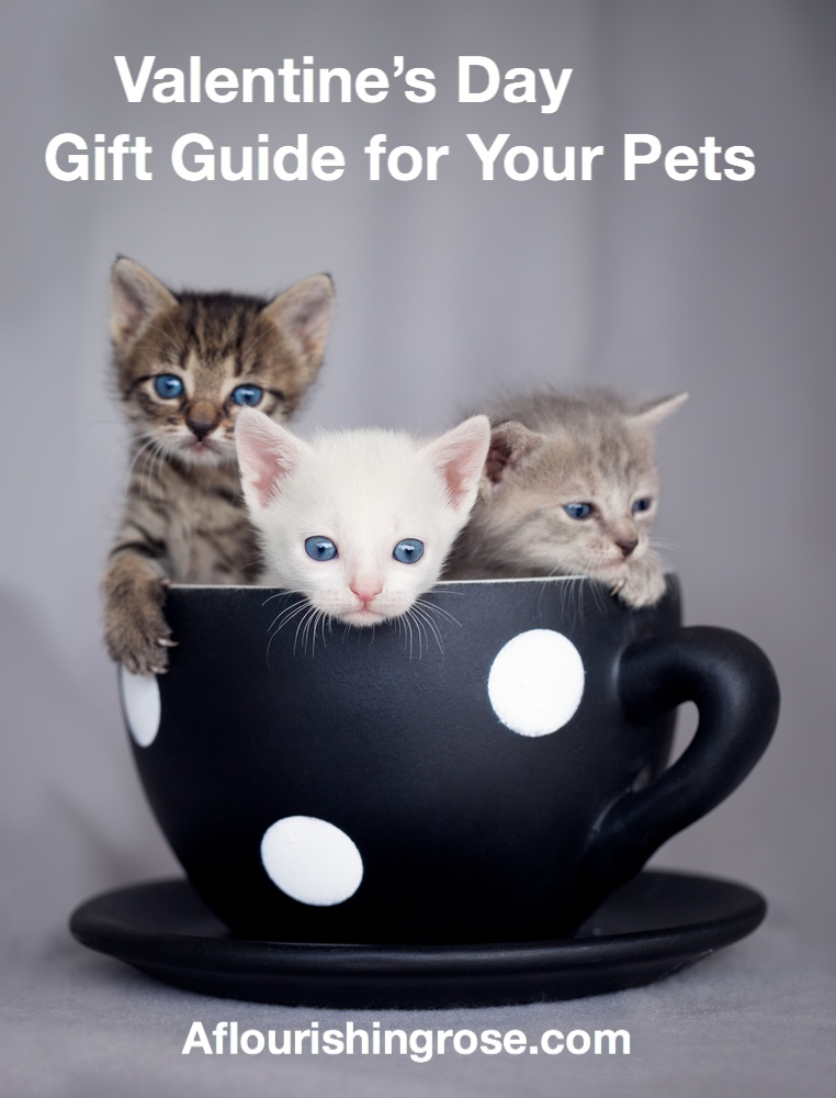 Valentine's Day Gift Guide for Your Pets